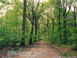 Гороскоп друидов на 2017 год по деревьях для каждого месяца