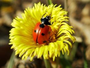 Народные приметы о насекомых