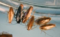 к чему снится тараканы ребенку