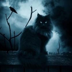 картинки черный кот и черный