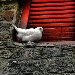 Народные приметы про голубя на подоконнике и около дома